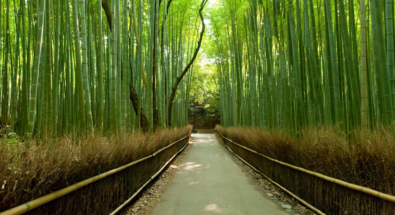 Image result for bamboo forest kyoto