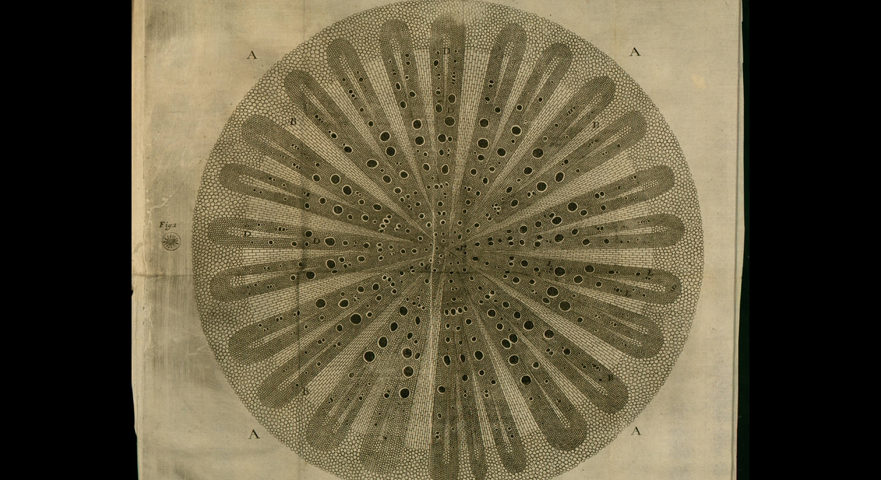 The Gorgeous Anatomy Of Plants By Nehemiah Grew Aleph