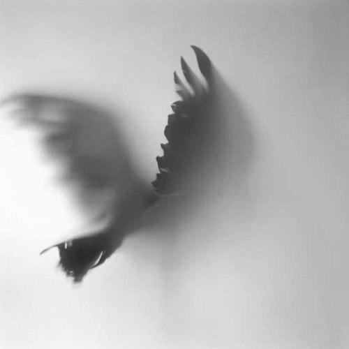 Cuervos3