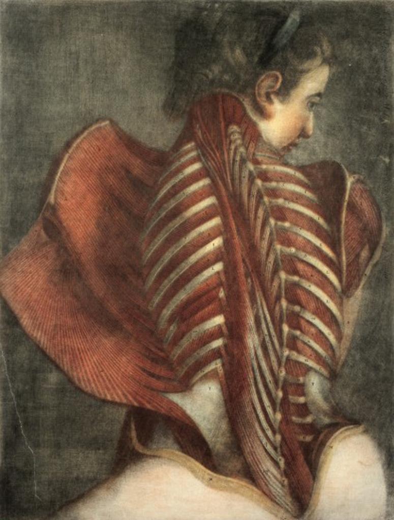L0019727 Gautier d'Agoty, mezzotint ecorche female torso, back, 1746