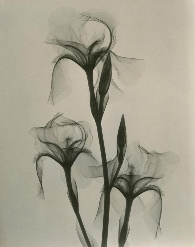 dr_dain_l_tasker_fleur-de-lis_1936.jpg__1072x0_q85_upscale