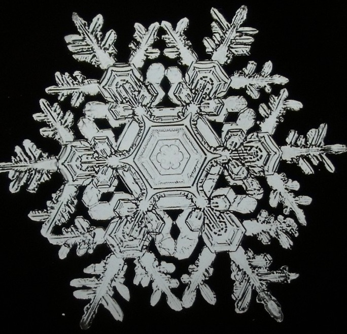 snowflake single guys You are not a beautiful or unique snowflake you're the same decaying organic matter as everything else  everywhere i travel, tiny life single-serving sugar .