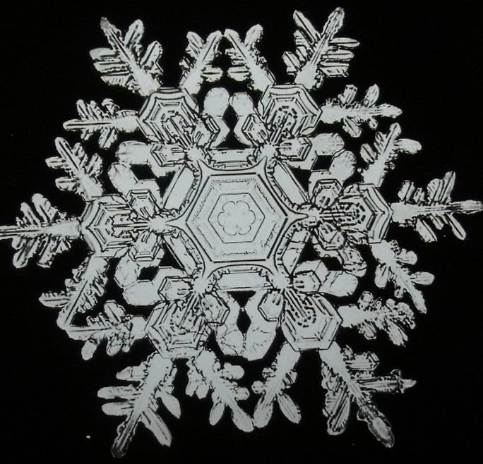 wilson-alwyn-bentley_snowflake