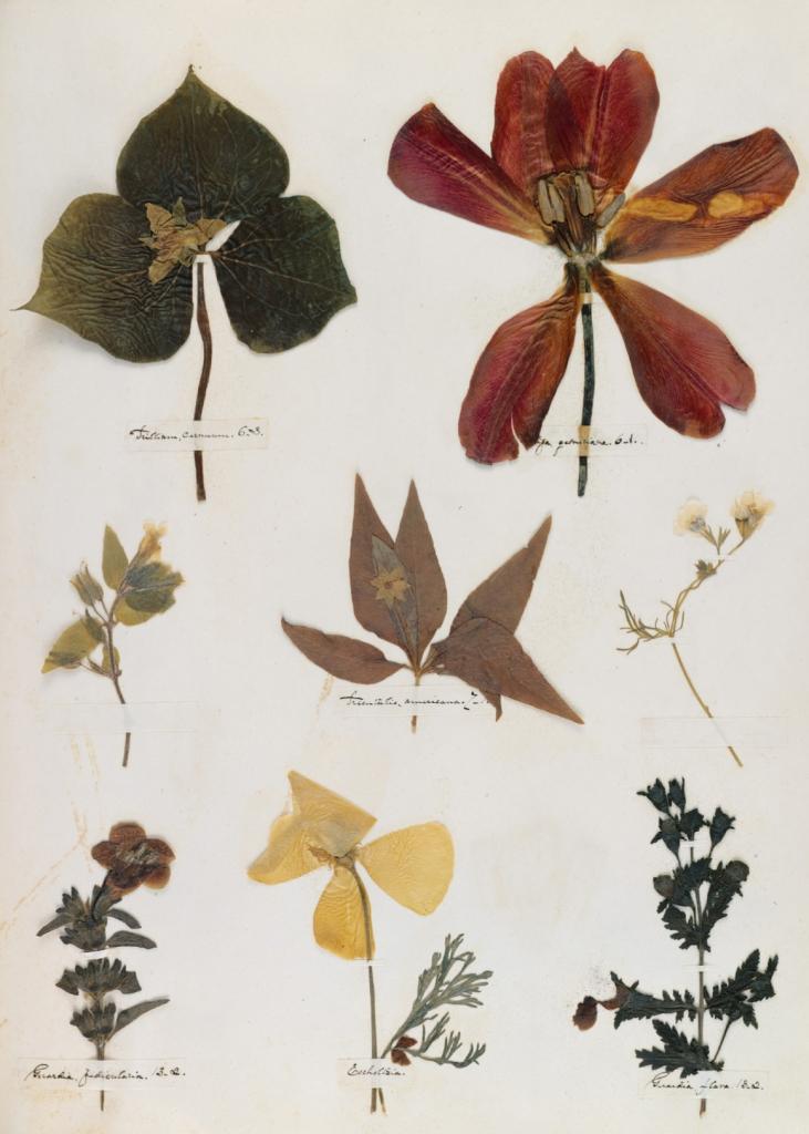 herbimage