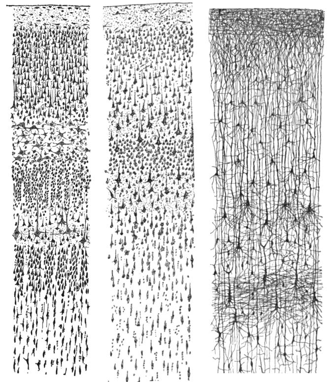 ramon-y-cajal-2-media