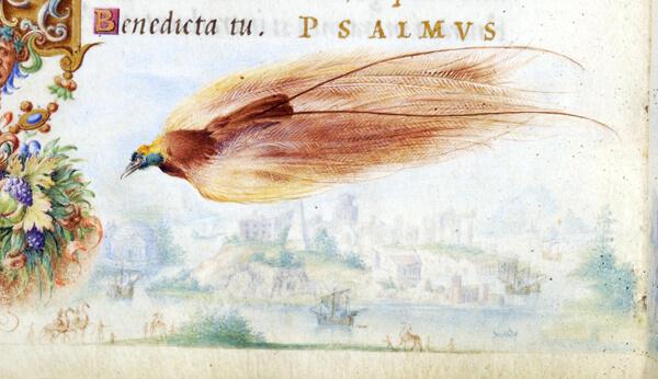 avesparaiso1