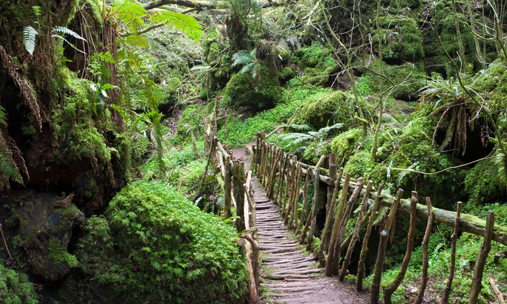 Puzzlewood: the mossy forest crossed by artisanal Roman pathways - Aleph